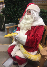 Father Christmas sitting on a bench holding a large albino burmese python