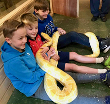 Three children sitting on the floor by the snake enclosures with a large albino Burmese python across their laps